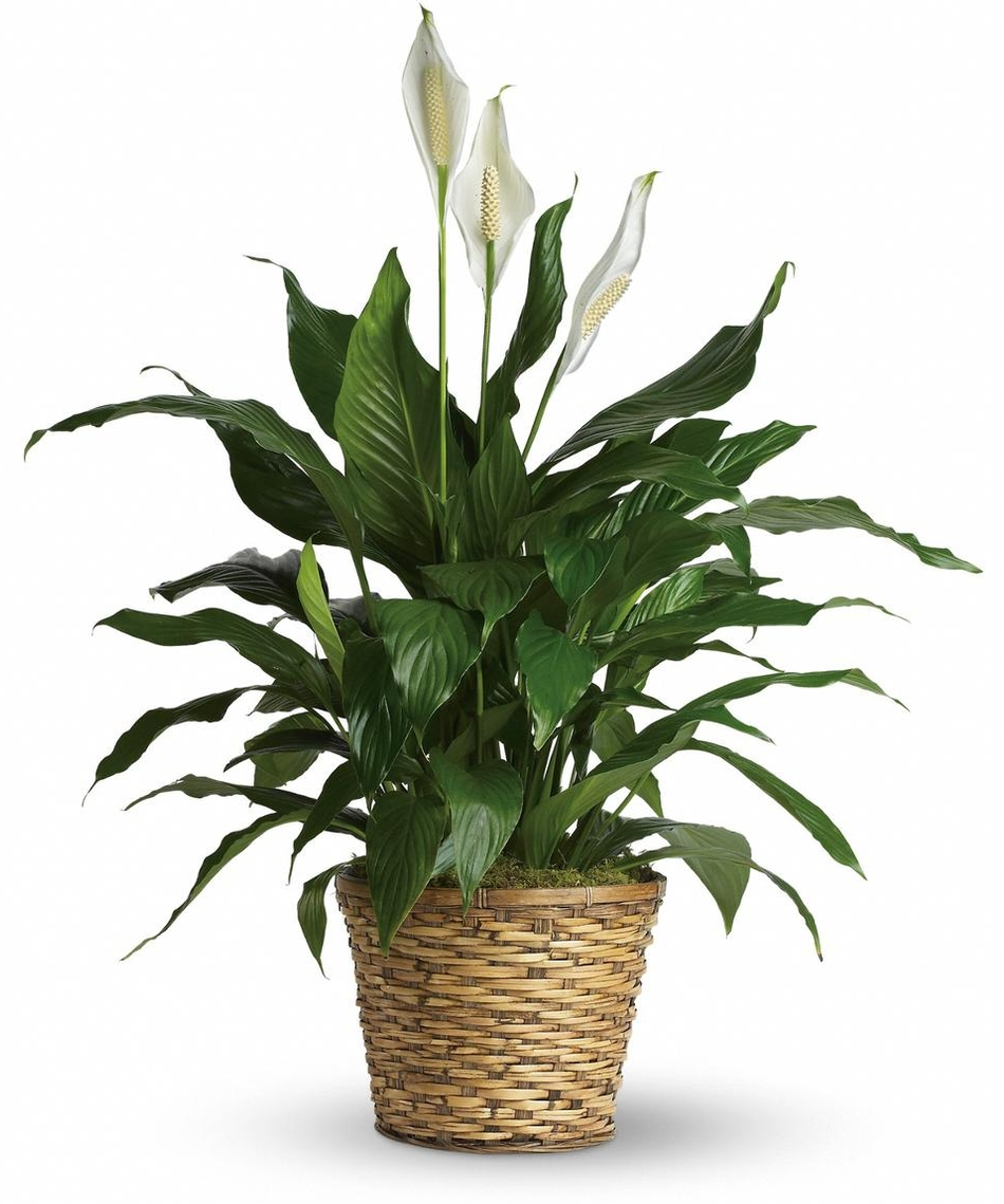 Flowers template christopher t jordan funeral home send flowers izmirmasajfo